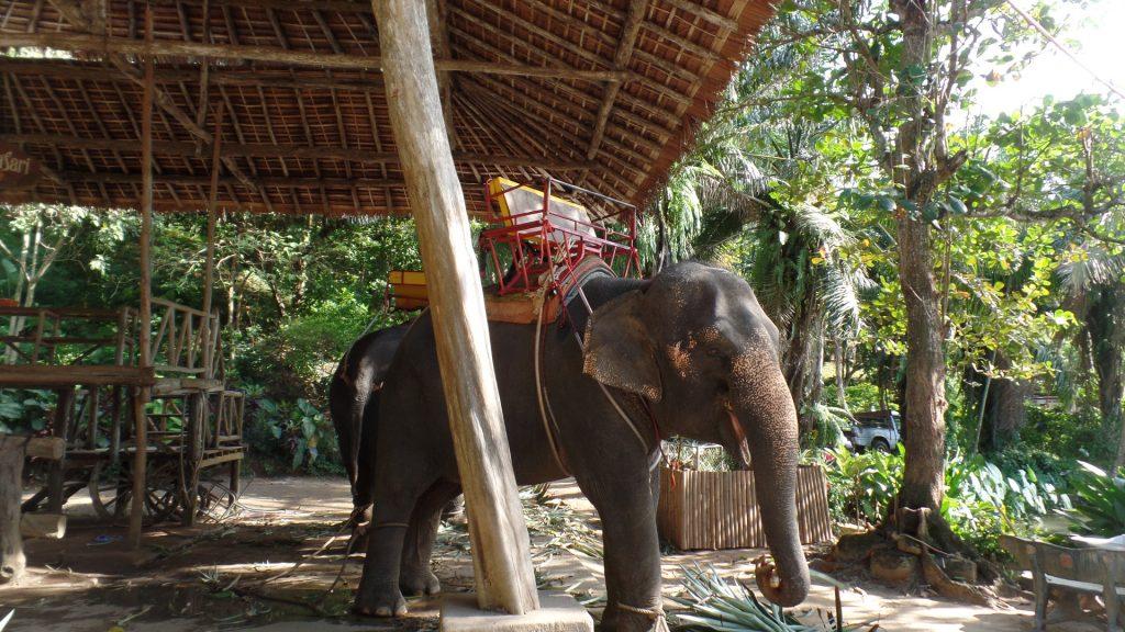 Sanctuarul Elefantilor Thailanda