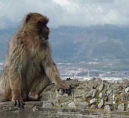 Gibraltar – aventura exotică de la capătul Europei