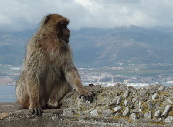 Tot ce trebuie sa stii daca vrei sa vizitezi Gibraltarul