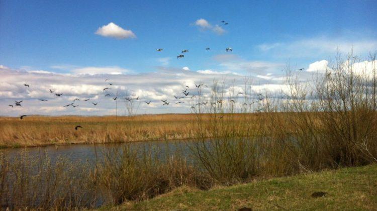 Descoperă Delta Dunării, paradisul nostru, unic în lume!