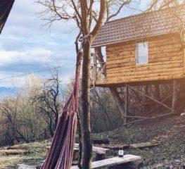 Top 10 căsuțe în copac din România, cu priveliște uimitoare, pentru o toamnă ca-n povești
