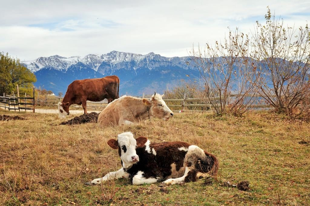Există Raiul pe pământ și e în România: Măgura, satul care atinge cerul