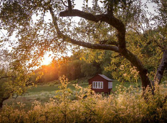 Cabana de poveste din mijlocul pădurii, bijuteria turistică neștiută a României
